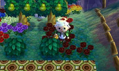 レア花育成地域。。