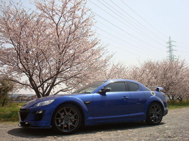桜とエイト1−1